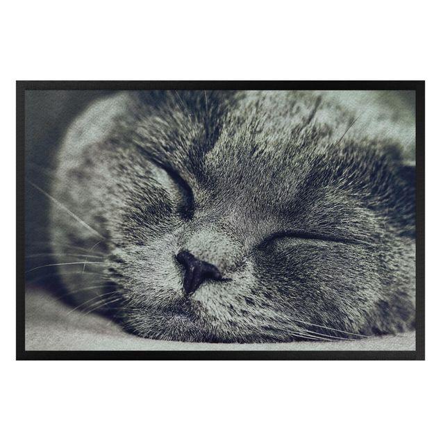 Fußmatte - Schlafende Katze