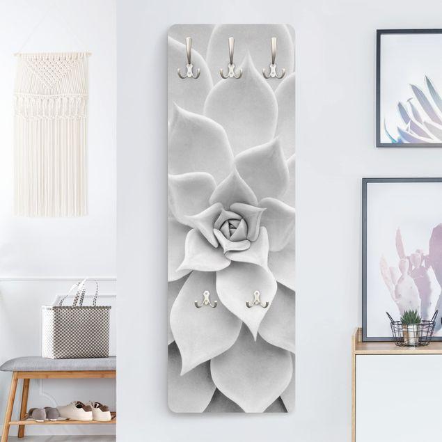 Garderobe - Kaktus Sukkulente