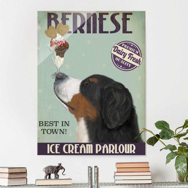 Glasbild - Berner Sennenhund mit Eis - Hochformat 4:3