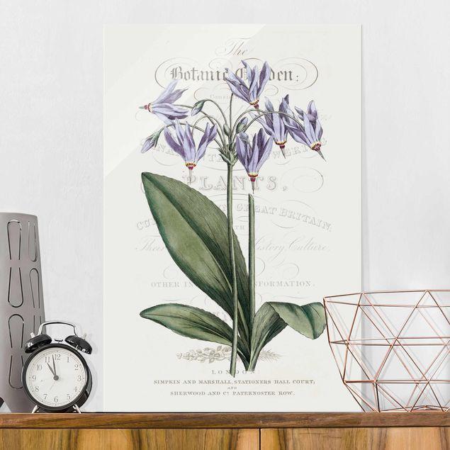Glasbild - Botanisches Tableau - Götterblume - Hochformat 3:2