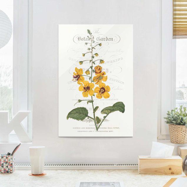 Glasbild - Botanisches Tableau - Königskerze - Hochformat 3:2