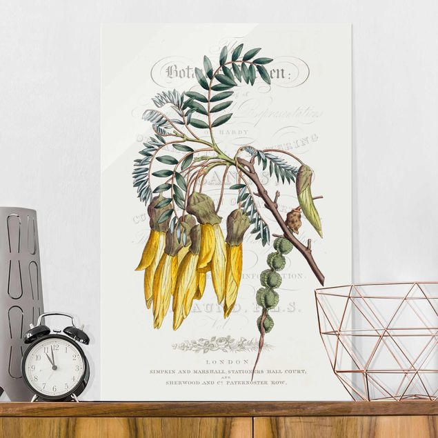 Glasbild - Botanisches Tableau - Schnurbaum - Hochformat 3:2