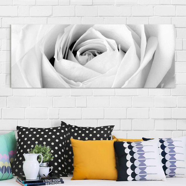 Glasbild - Close Up Rose - Panorama Quer