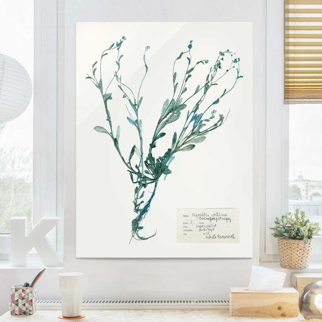 Glasbild - Gepresste Blumen - Vergissmeinnicht - Hochformat 4:3
