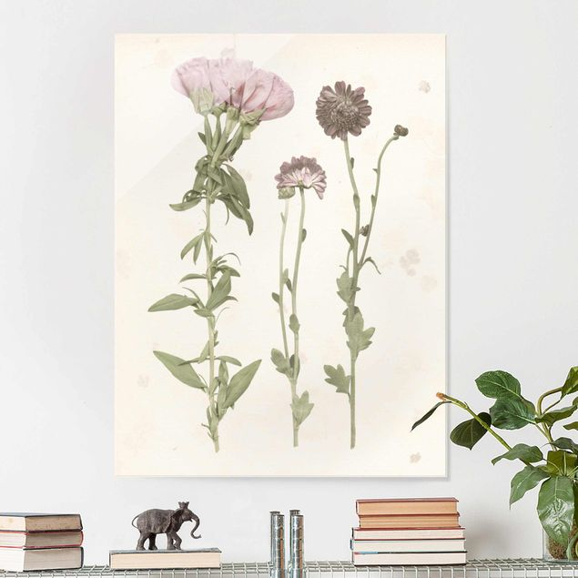 Glasbild - Herbarium in rosa III - Hochformat 4:3