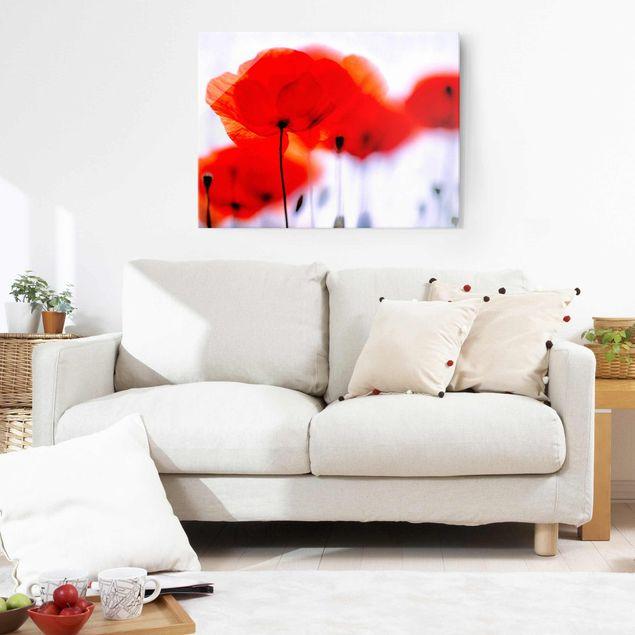 Glasbild - Magic Poppies - Quer 4:3 - Blumenbild Glas