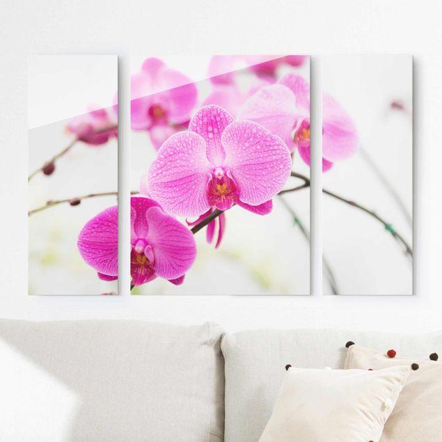 Glasbild mehrteilig - Nahaufnahme Orchidee 3-teilig
