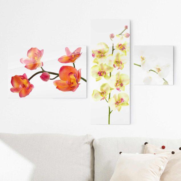 Glasbild mehrteilig - Orchideen Collage 3-teilig