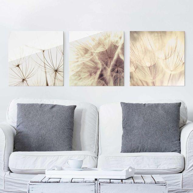 Glasbild mehrteilig - Pusteblumen und Gräser 3-teilig - Wandbild Glas