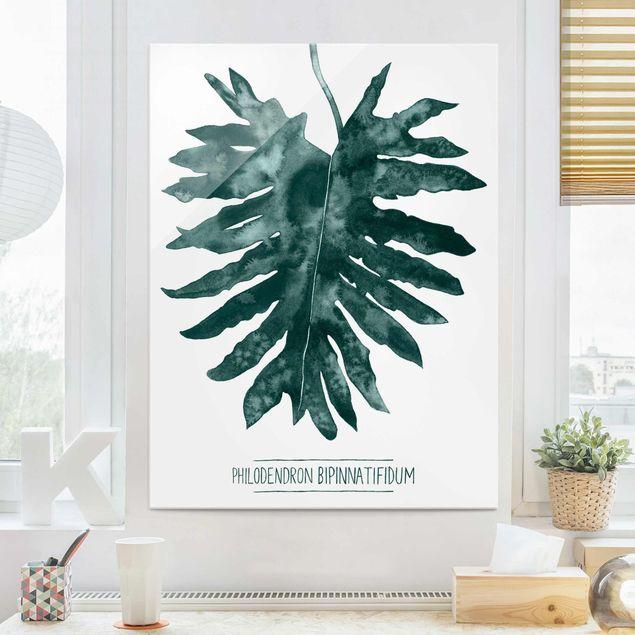 Glasbild - Smaragdgrüner Philodendron Bipinnatifidum - Hochformat 4:3