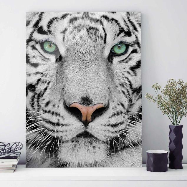 Glasbild - Weißer Tiger - Hoch 3:4