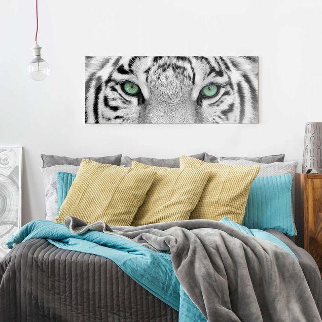 Glasbild - Weißer Tiger - Panorama Quer