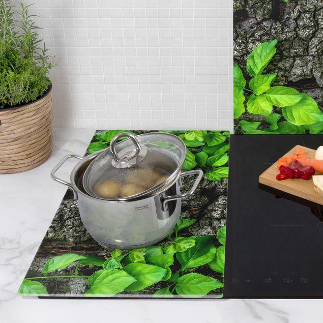 Herdabdeckplatte Glas - Efeuranken Baumrinde
