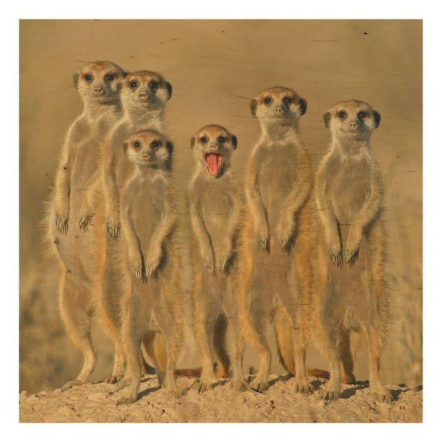 Holzbild - Meerkat Family - Quadrat 1:1