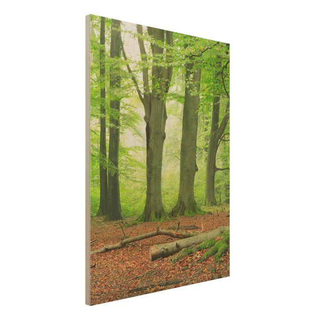 Holz Wandbild - Mighty Beech Trees - Hoch 3:4