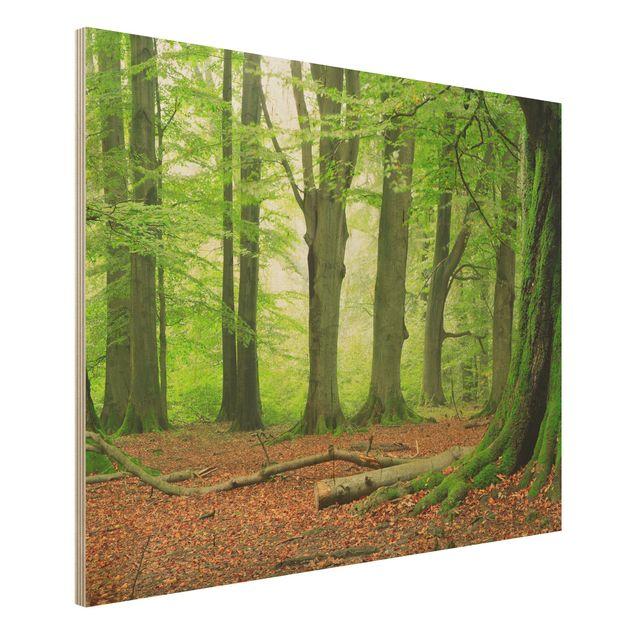 Holz Wandbild - Mighty Beech Trees - Quer 4:3