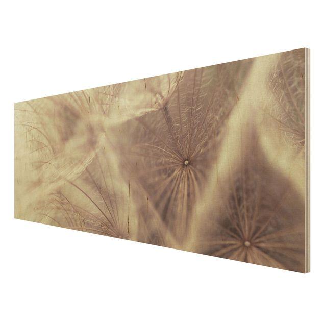 Holzbild Pusteblume - Detailreiche Pusteblumen Makroaufnahme mit Vintage Blur Effekt - Panorama Quer