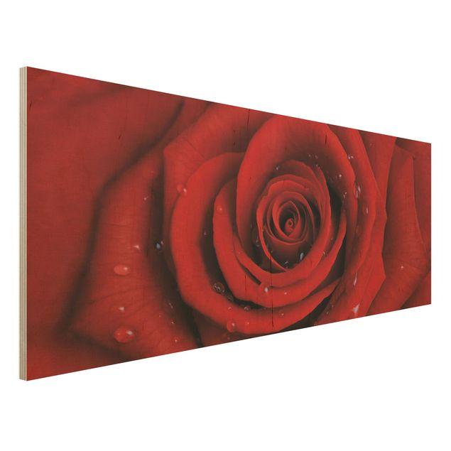 Holzbild - Rote Rose mit Wassertropfen - Panorama Quer