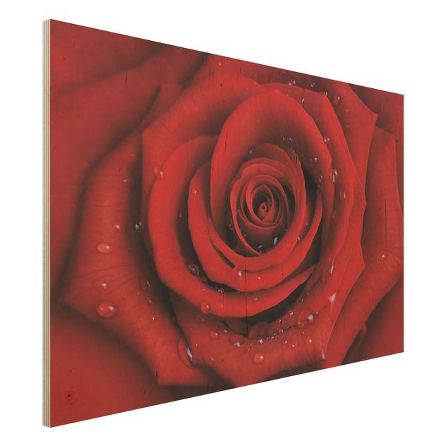 Holzbild - Rote Rose mit Wassertropfen - Quer 3:2