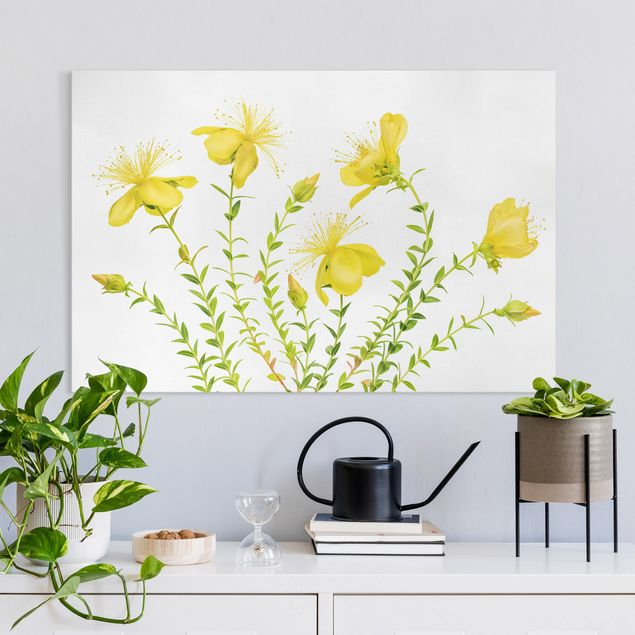 Leinwandbild - Johanniskraut in voller Blüte - Querformat 3:2