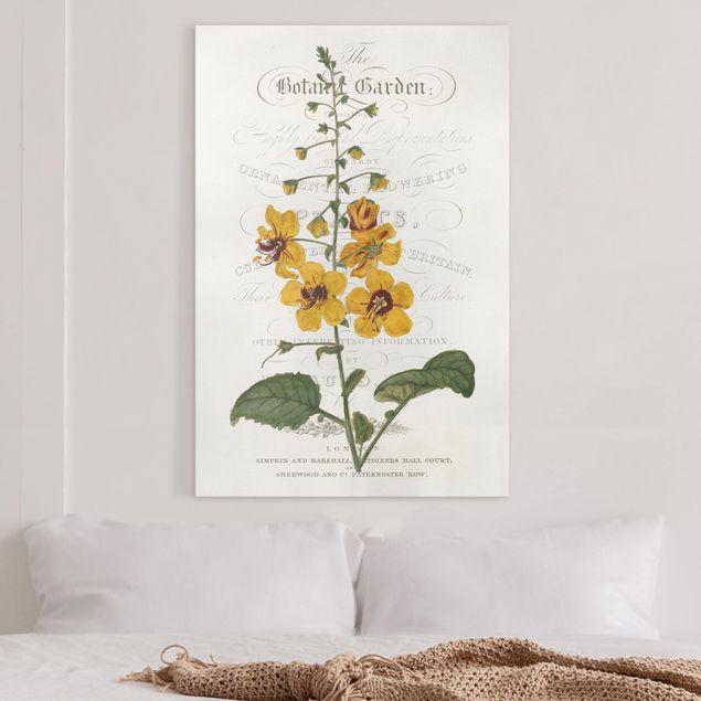Leinwandbild - Botanisches Tableau - Königskerze - Hochformat 3:2