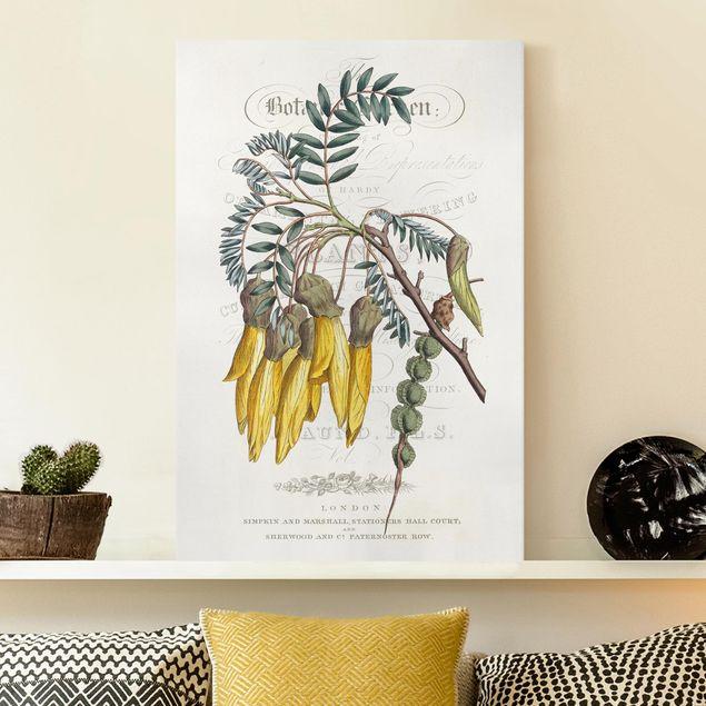 Leinwandbild - Botanisches Tableau - Schnurbaum - Hochformat 3:2
