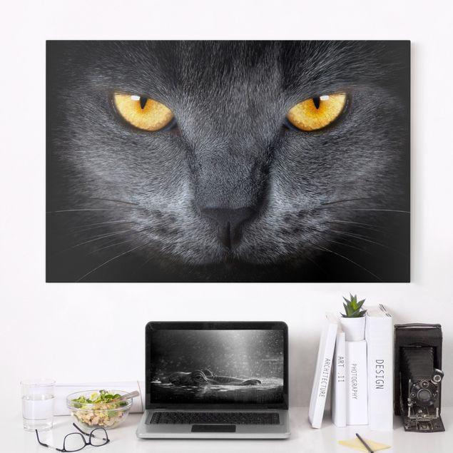 Leinwandbild - Cats Gaze - Quer 3:2