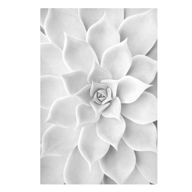 Leinwandbild - Kaktus Sukkulente - Hochformat 2:3