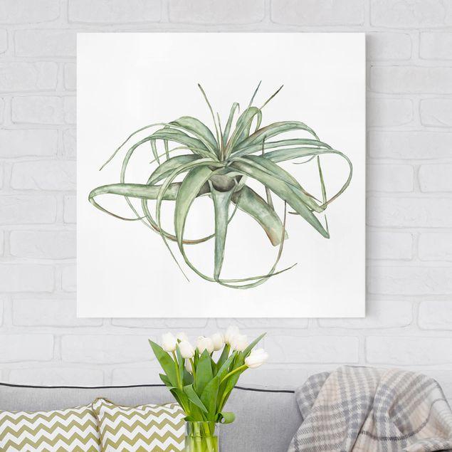 Leinwandbild - Luftpflanze Aquarell I - Quadrat 1:1