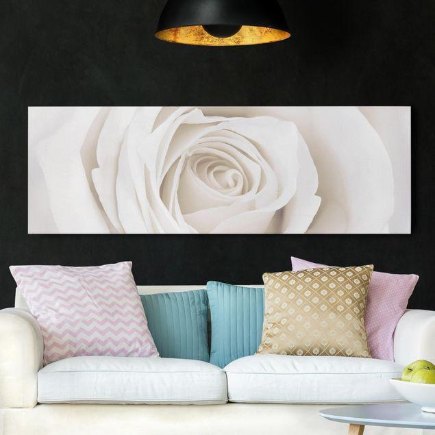 Leinwandbild - Pretty White Rose - Panorama Quer