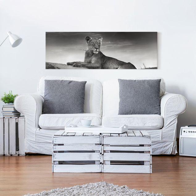Leinwandbild Schwarz-Weiß - Resting Lion - Panoramabild Quer