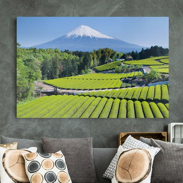 Leinwandbild - Teefelder vor dem Fuji - Quer 3:2