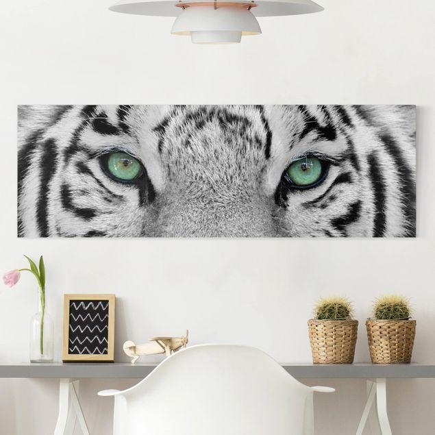 Leinwandbild Schwarz-Weiß - Weißer Tiger - Panoramabild Quer