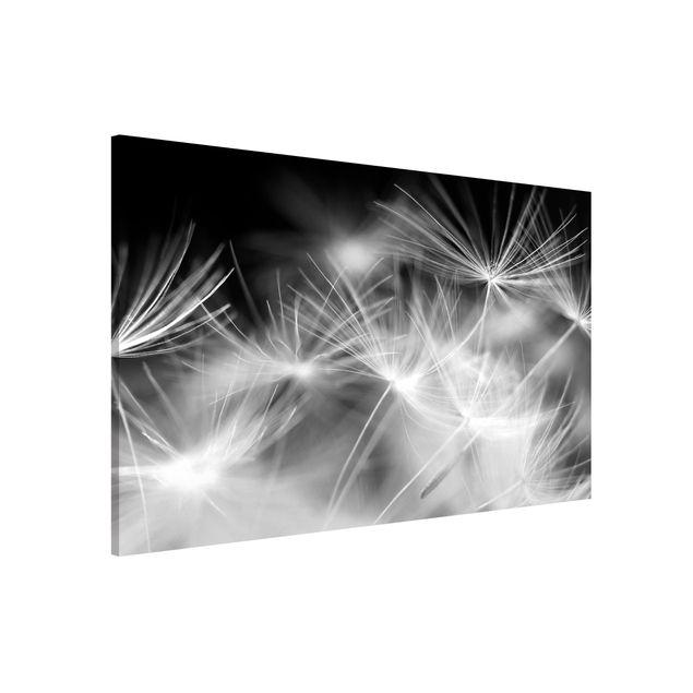 Magnettafel - Bewegte Pusteblumen Nahaufnahme auf schwarzem Hintergrund - Memoboard Quer