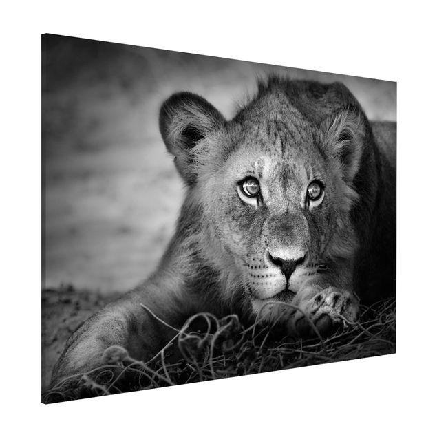 Magnettafel - Lurking Lionbaby - Memoboard Quer