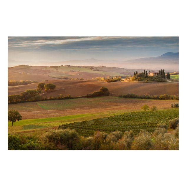 Magnettafel - Olivenhain in der Toskana - Memoboard Quer