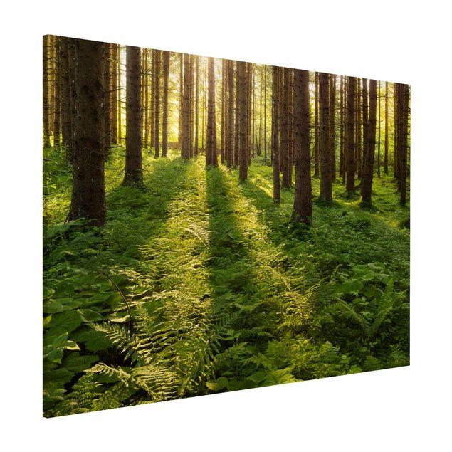 Magnettafel - Sonnenstrahlen in grünem Wald - Memoboard Hoch