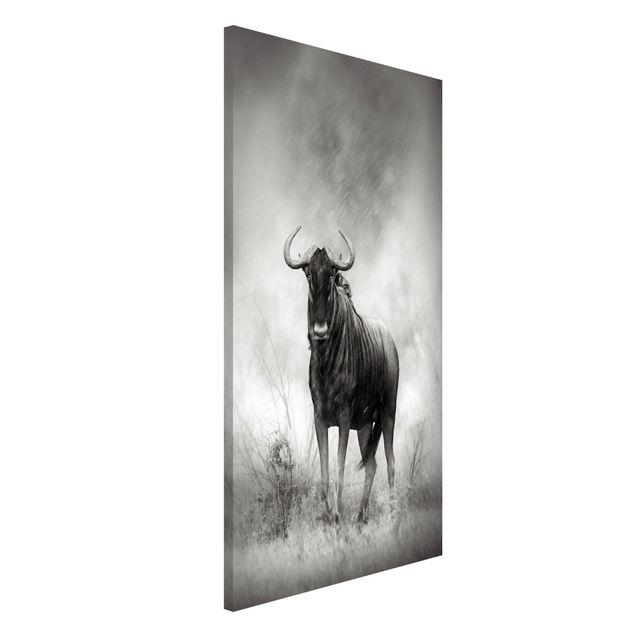 Magnettafel - Staring Wildebeest - Memoboard Hoch