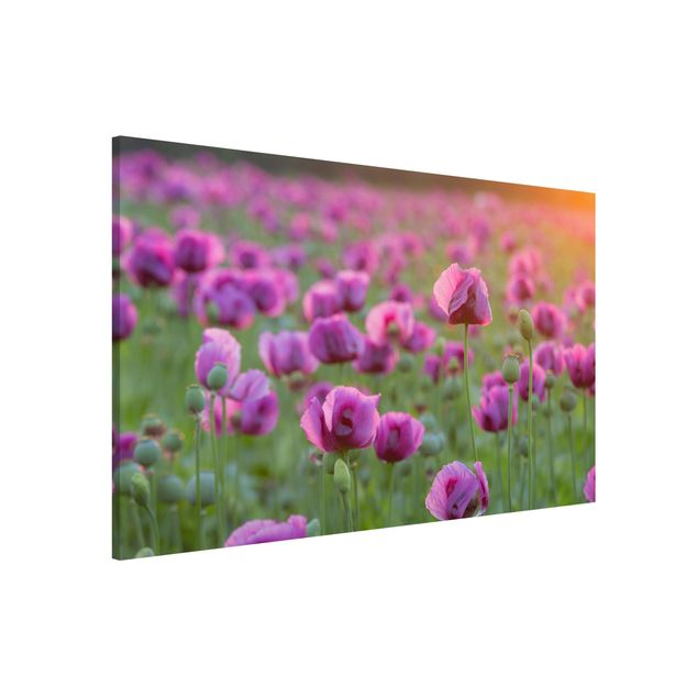 Magnettafel - Violette Schlafmohn Blumenwiese im Frühling - Memoboard Hoch