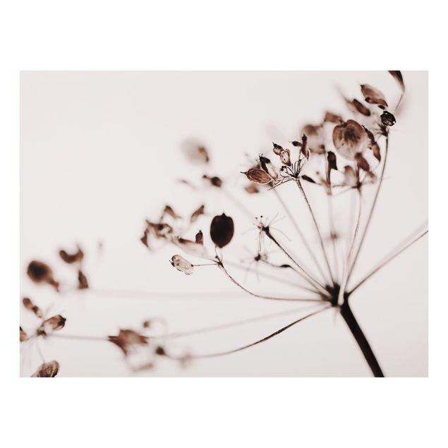 Spritzschutz Glas - Makroaufnahme Trockenblume im Schatten - Querformat 4:3