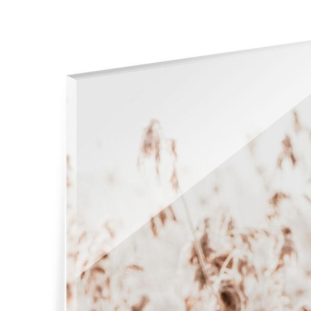 Spritzschutz Glas - Meer von sonnigem Schilfgras - Quadrat 1:1