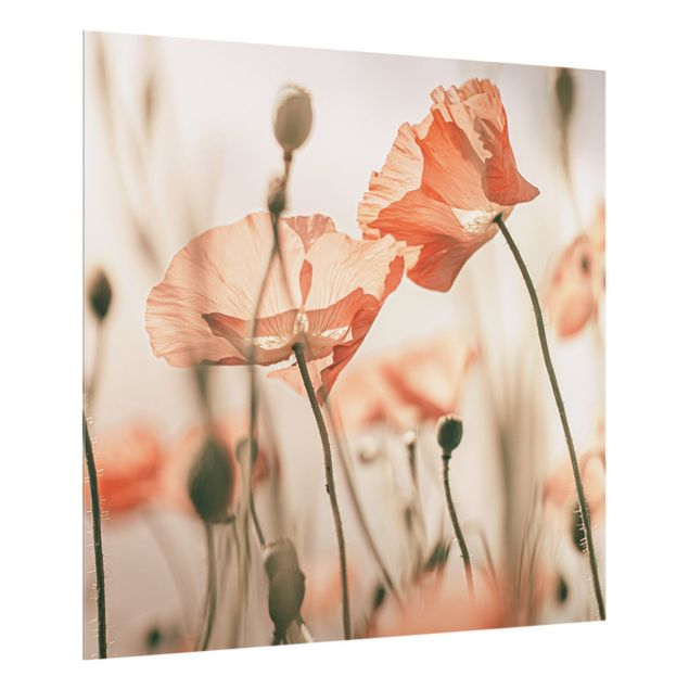 Spritzschutz Glas - Mohnblüten im Sommerwind - Quadrat 1:1