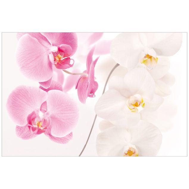 Orchideenbild Fensterfolie - Sichtschutz Fenster Delicate Orchids - Blumen Fensterbilder