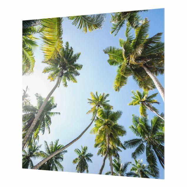 Spritzschutz Glas - Palmen Himmel - Quadrat 1:1