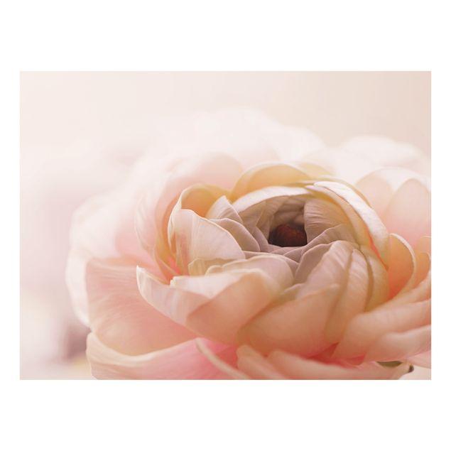 Spritzschutz Glas - Rosa Blüte im Fokus - Querformat 4:3