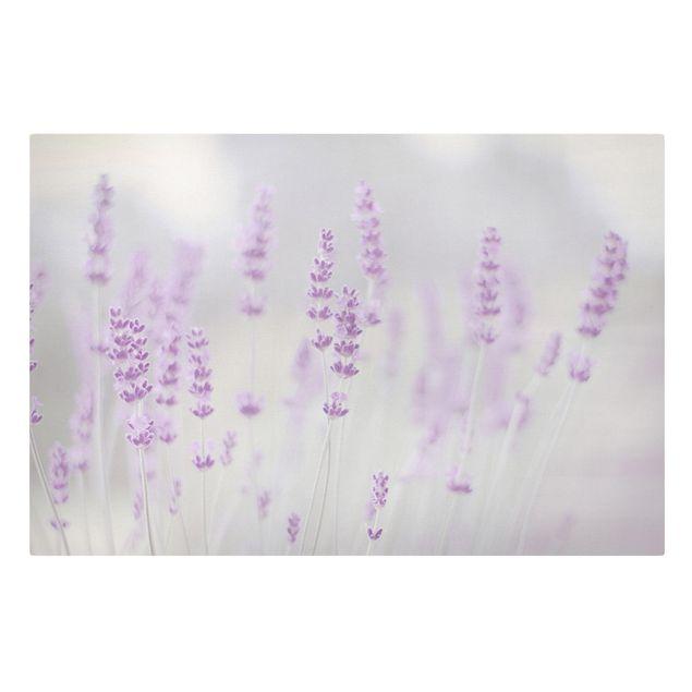 Leinwandbild - Sommer im Lavendelfeld - Querformat 3:2