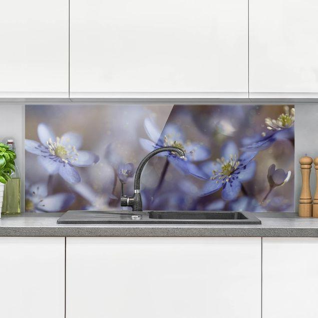 Spritzschutz Glas - Anemonen in Blau - Panorama Quer