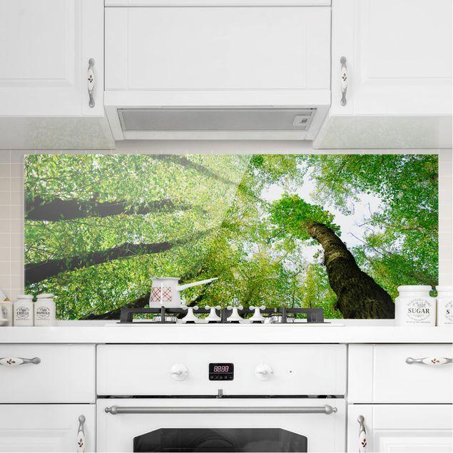 Spritzschutz Glas - Bäume des Lebens - Panorama Quer