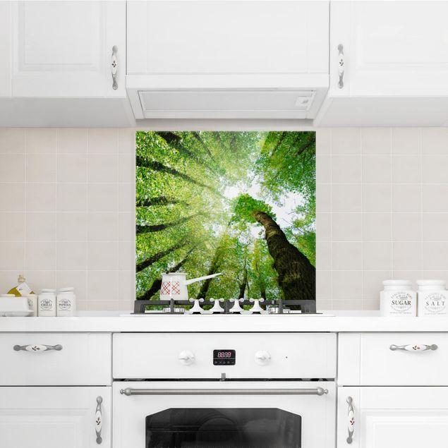 Spritzschutz Glas - Bäume des Lebens - Quadrat 1:1