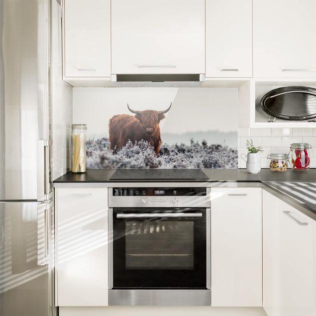 Spritzschutz Glas - Bison in den Highlands - Querformat 1:2